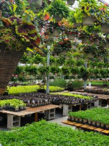 plants - mobile