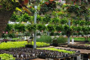 desktop plants